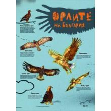 Комплект плакат, 6 стикера и 6 магнита-пъзел